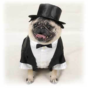 Dog in Tux