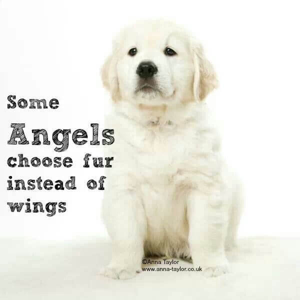 Pet Angels