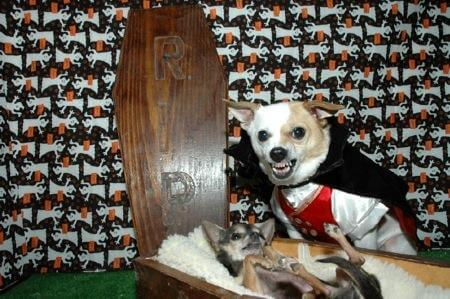 coffin dog