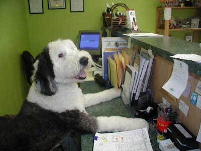 dog sitting at desk