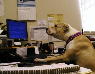 Dog at a desk