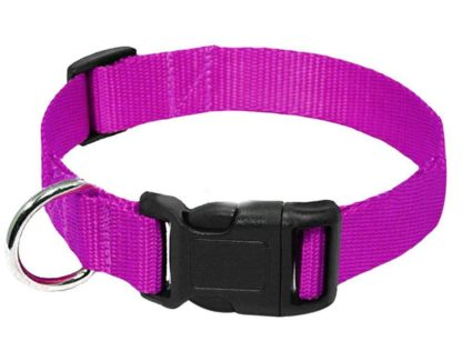 purple nylon buckle dog and cat collar