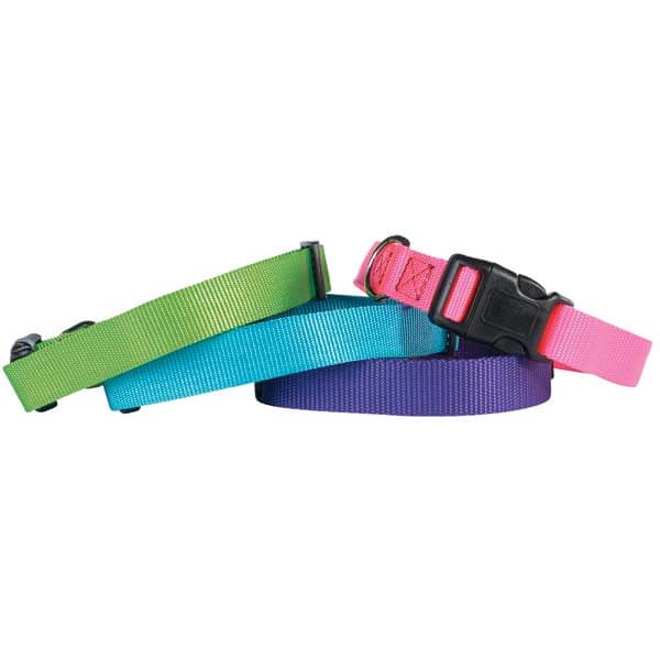 Bright colored pet collars