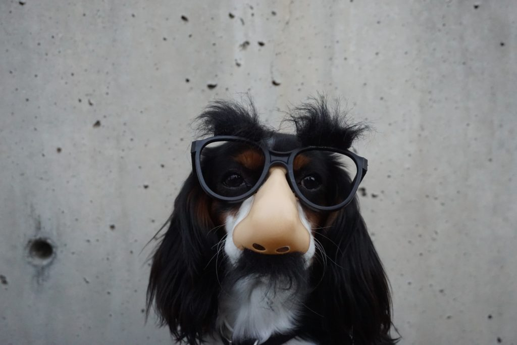 dog in funny glasses